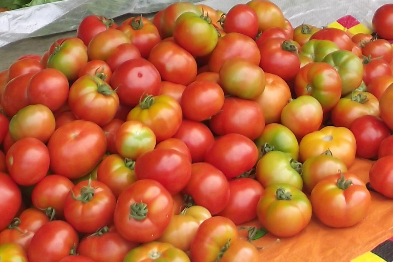 Expérience : Quelle variété de tomate est la plus adaptée à Anjouan ?